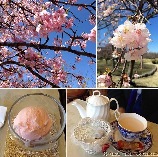 Sakura 3.5